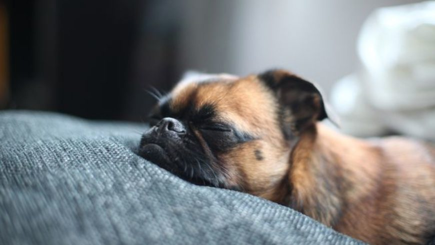 How Much Do Dogs Sleep?
