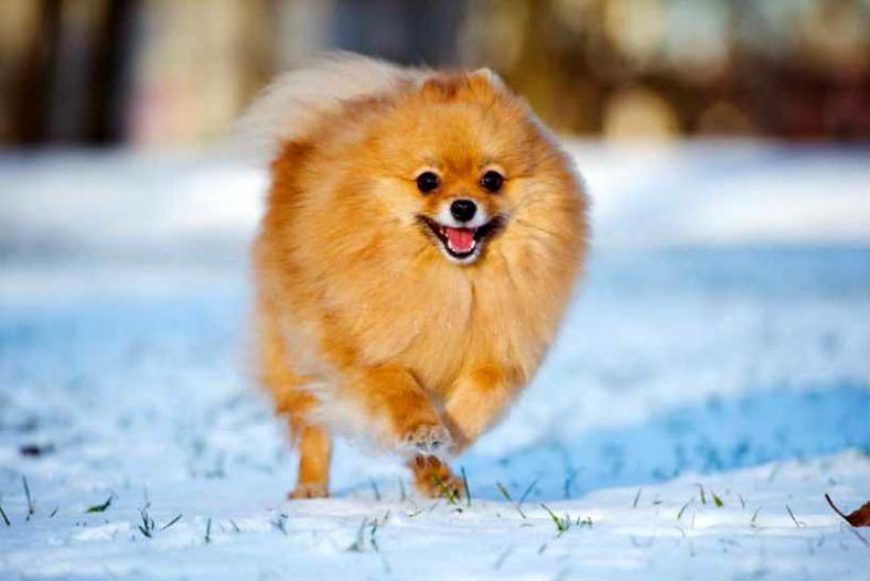 Winter Tips For Your Pet