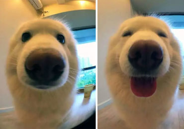 """Pet Pics Before and After Being Called a """"Good Boy"""""""