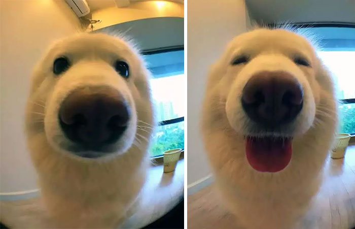 "Pet Pics Before and After Being Called a ""Good Boy"""